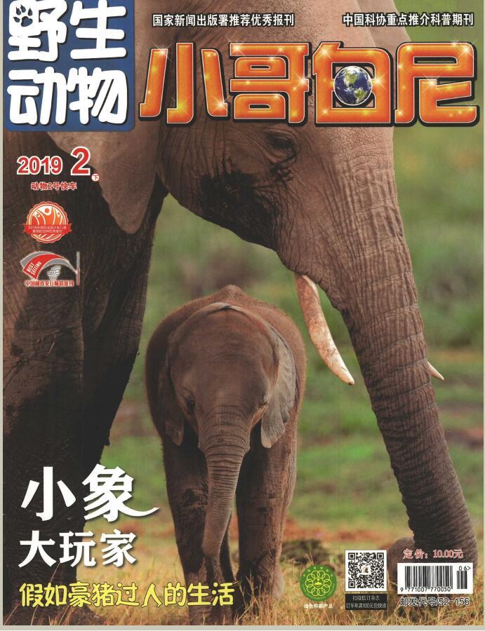 小哥白尼(野生动物)杂志订购