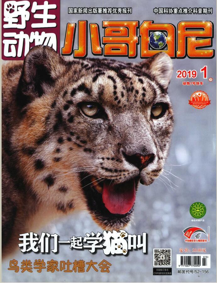 小哥白尼(野生动物)杂志征订