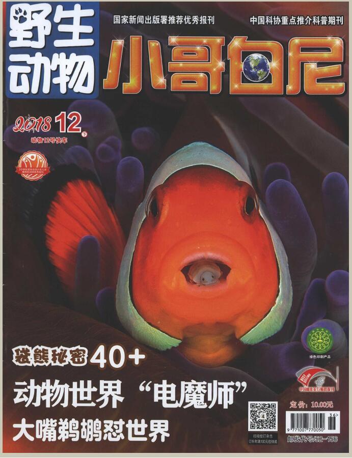小哥白尼(野生动物)杂志邮购